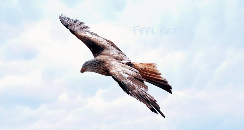 E.F.T : Emotional Freedom Techniques